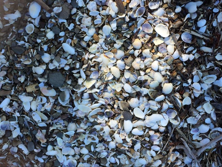 So many shells